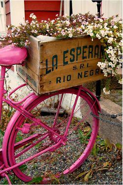 bikeBicycles, Vintage Bikes, Pink Bikes, Gardens, Hot Pink, Old Bikes, Planters, Crates, Flower Boxes