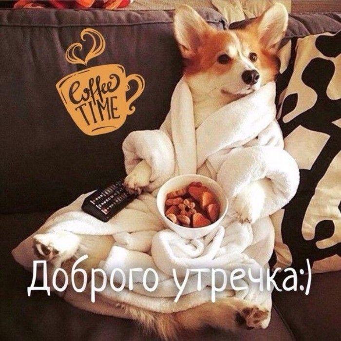 открытки с собачками смешные с добрым утром предназначен удерживать