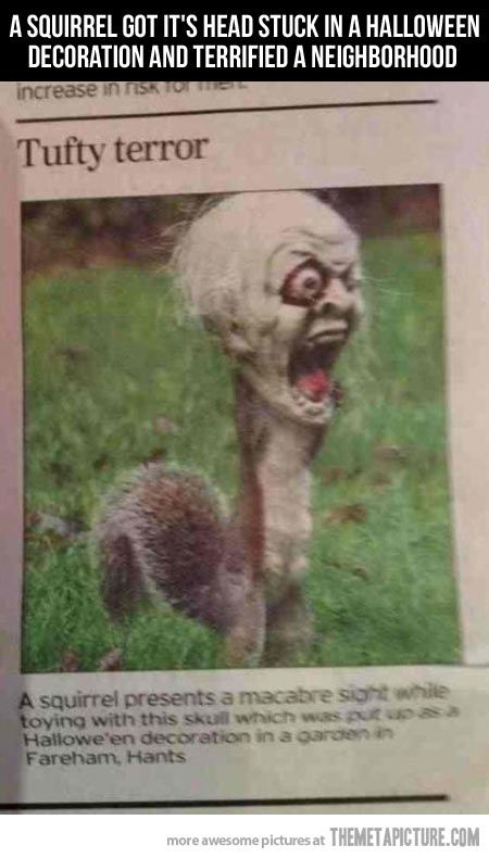 This squirrel got his head stuck in a halloween decoration, scared the