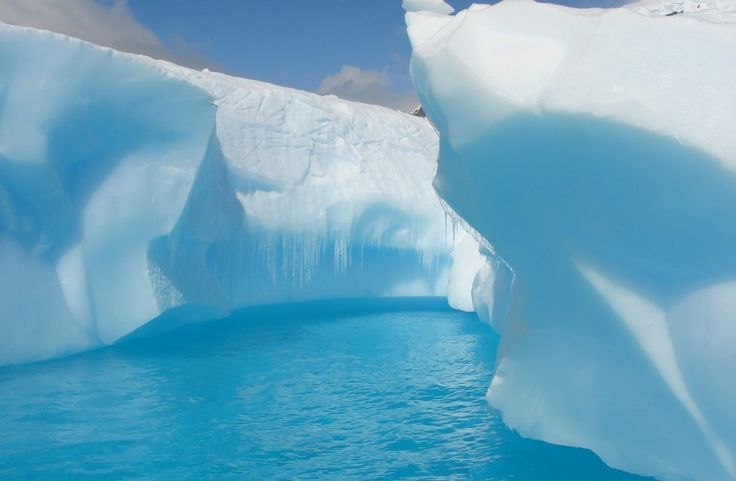 Antarctica: The White Continent - Trufflepig