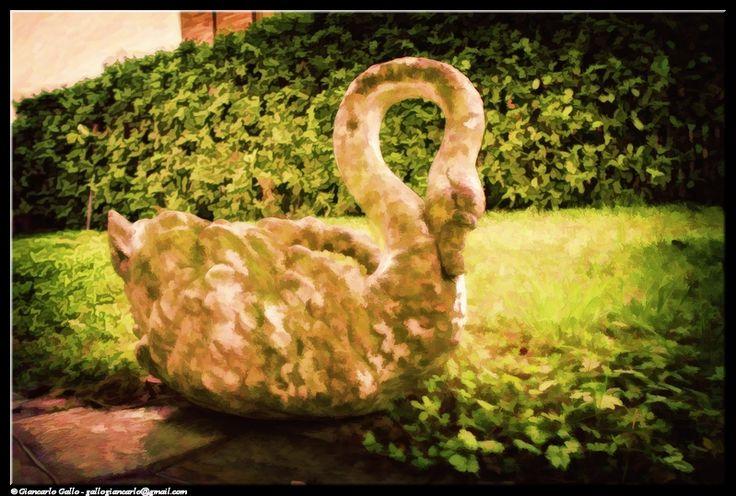 Cigno - photographic processing (308) - elaborazione fotografica dell'immagine di un cigno utilizzato come portavaso da giardino