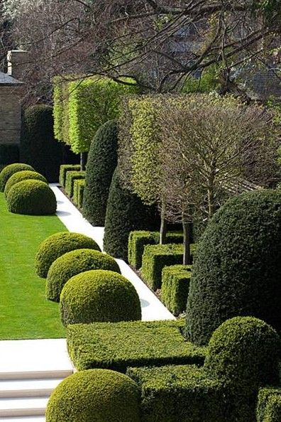 buxus, taxus, perfect structure.