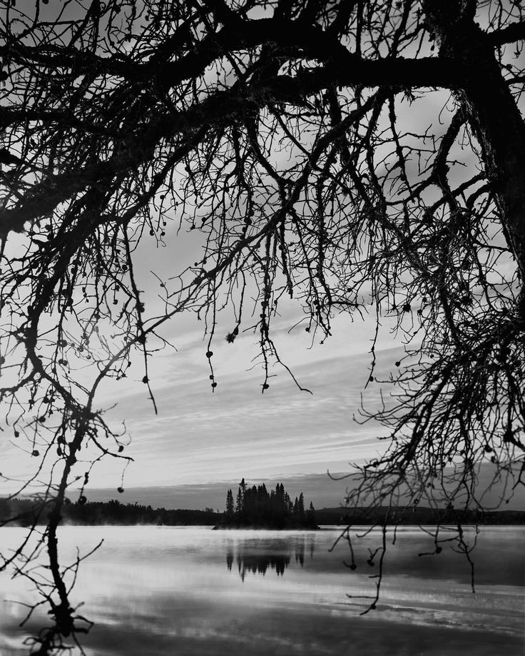 Jack Pine Island. 30 x 40 in. Analog silver gelatin print.  I always feel the spirit of the Group of Seven whenever I travel the Canadian Shield of Northern Ontario. This scene captured with my 8 x 10 camera next to the Trans-Canada Highway near the town of Kenora.  #Kenora #transcanadahighway #lakeofthewoods #canadianshield #northernontario #groupofseven #traditionalphotography #filmisnotdead #canadianart  #largeformatphotography #analogphoto #silvergelatin  #largeformatphotographer…