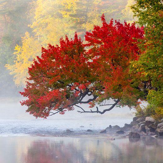 port sydney tree1