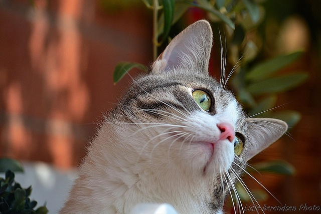 Mishi watching a bee by Lidie71, via Flickr