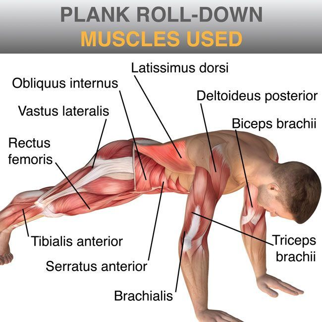 what muscles are used in a plank - Google Search