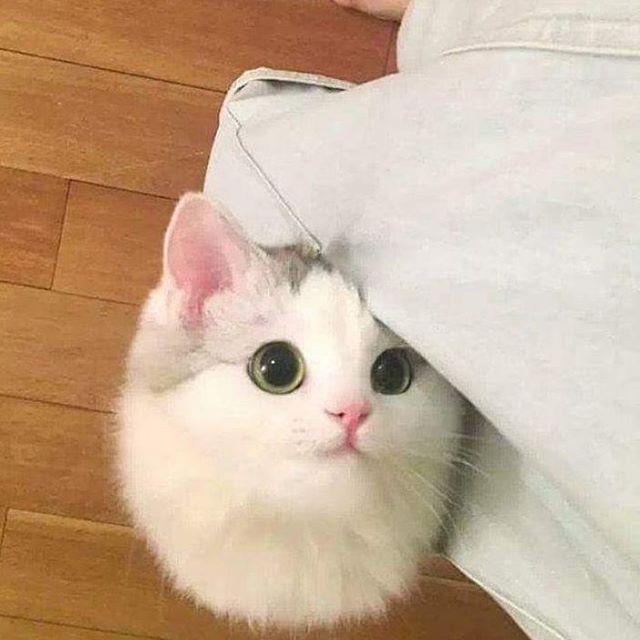 "Sevimli Kediler  - Cute Cats (@cats_kedi) on Instagram: ""Ama çok tatlısın ☺ Photo  @keiyuichi . . . . . #kedi #kedicik #kediler #sevimli #pisi #miyav #uyku…"""
