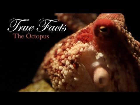 True Facts (sorta) About the Octopus  octopi do everything hardcore.  and clams are just stupid.