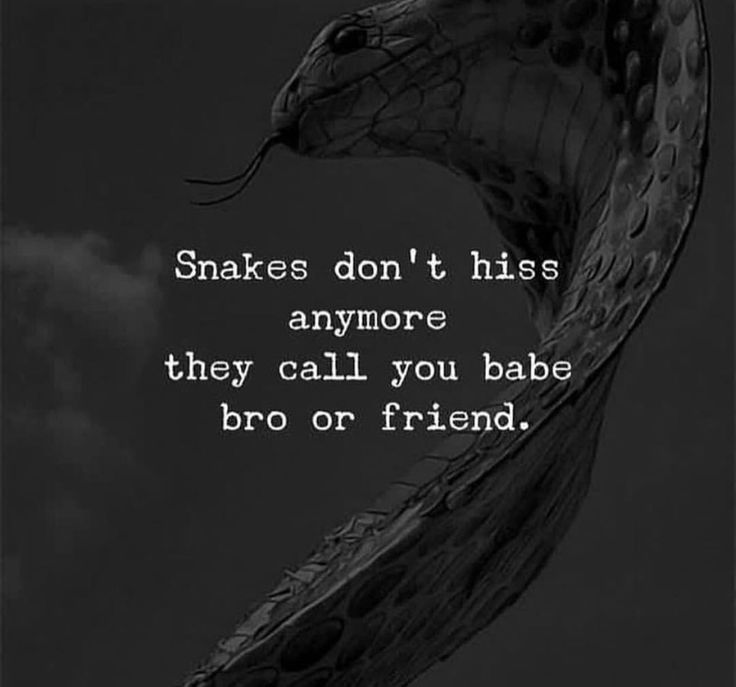 A Great Life Quote You Can T Really Trust Anyone Anymore With Love It S Too Much Of A Responsibility For Someone To Snake Quotes Betrayal Quotes Life Quotes