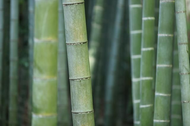 Bamboo Charcoal Benefits for you.