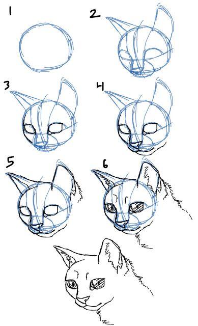 différentes têtes de chat
