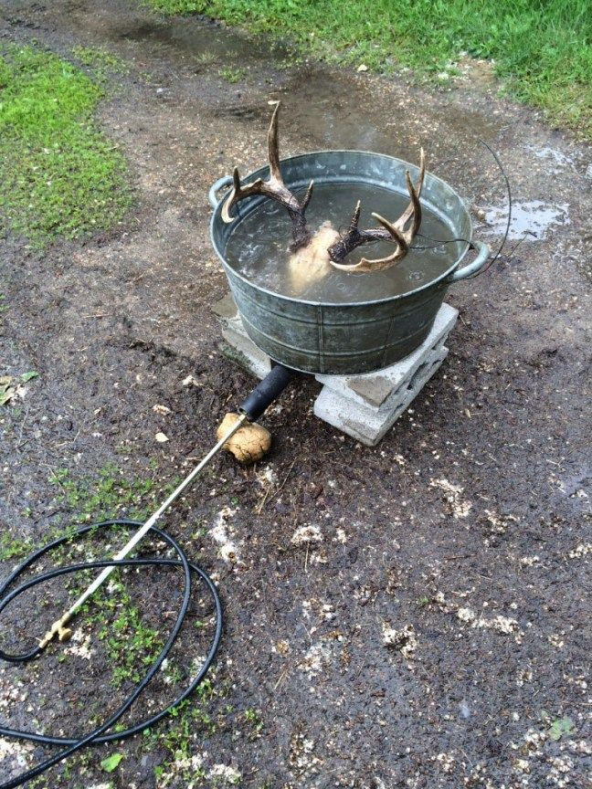 How I boiled and cleaned an old deer head for a European mount, plus other cool stuff on my blog.