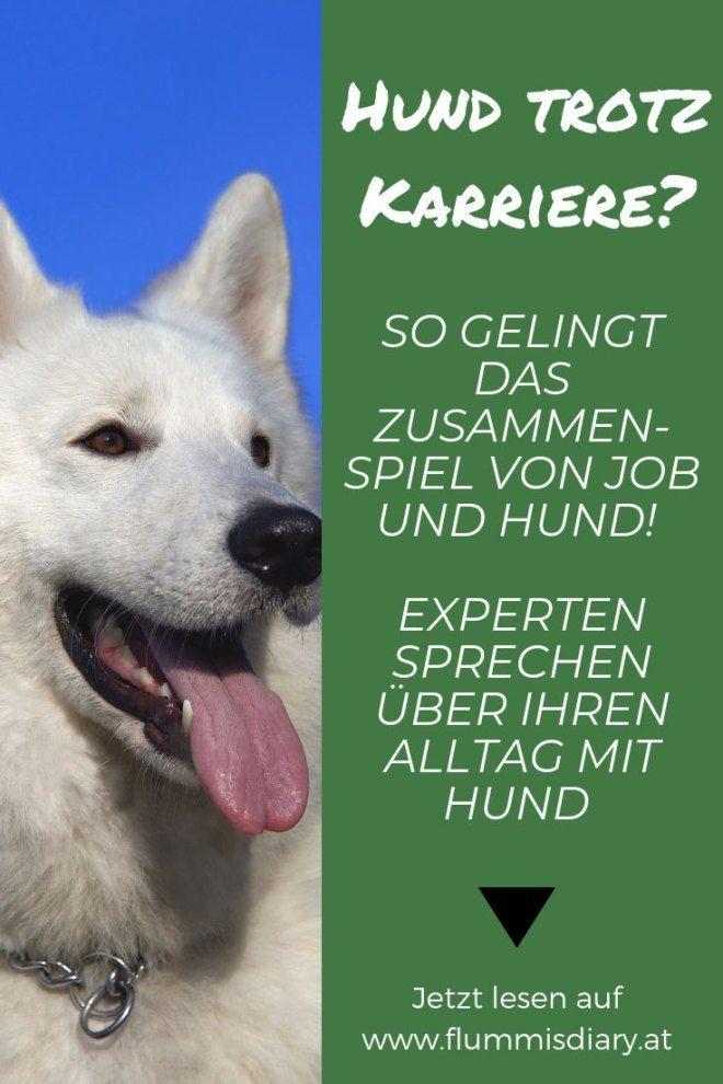 Wie Vereinbart Man Job Hund Hundeblogger Erzahlen Hunde Hundchen Training Und Hundetraining