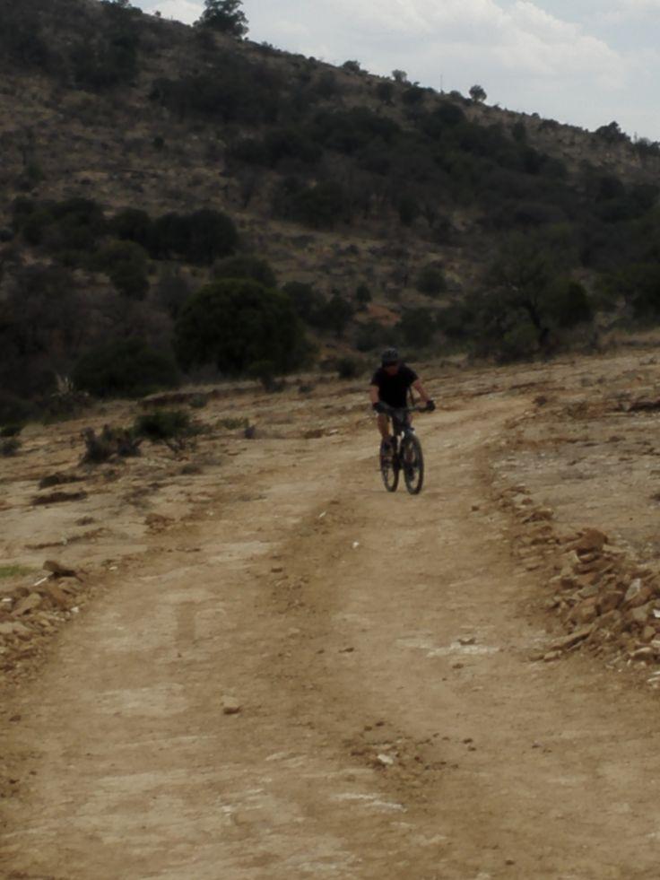 Yendo un ciclista por los senderos de la sierra de Amozoc, encontró un zorro bebiendo agua en un humedal natural; de inmediato el ciclista dejó de pedalear para intentar acariciar al mamífero. Éste…