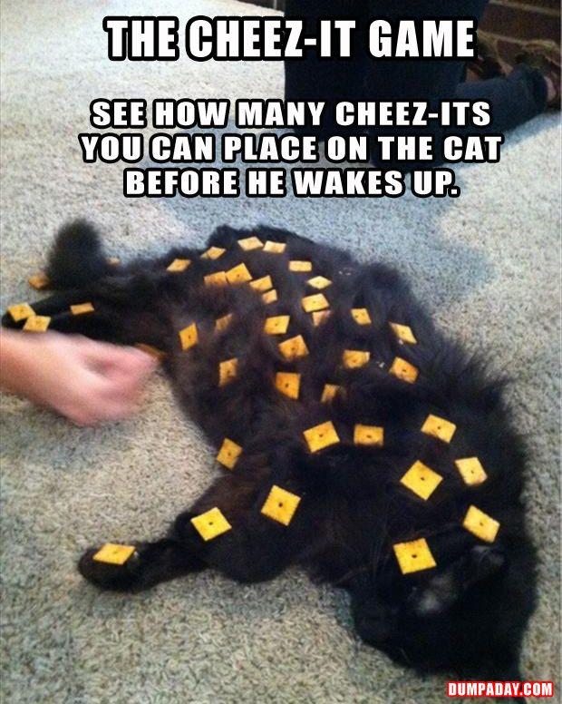 Funny pics on animals