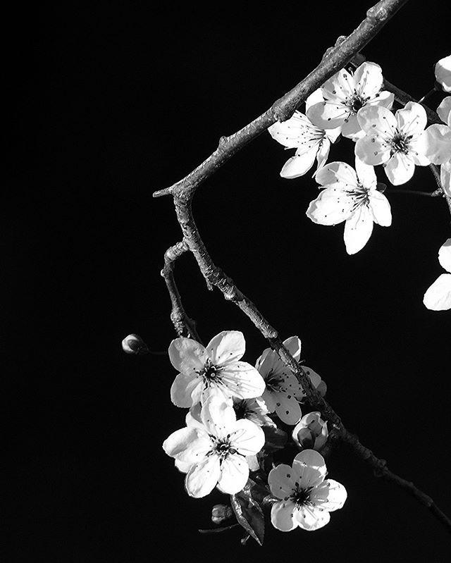 Epingle Par Jagoda Magnucka Sur Www Palomacasile Com Fleur Noir Et Blanc Photo Noir Et Blanc Paysage Fond D Ecran Noir Et Blanc