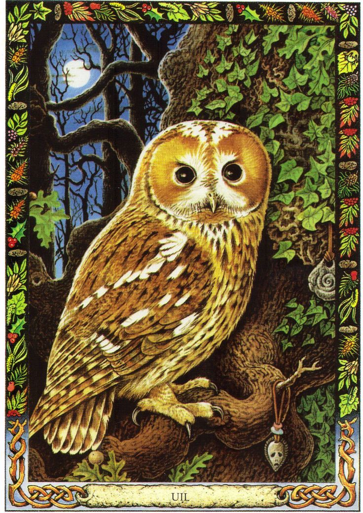 Owl | The Druid Animal Oracle by Stephanie and Phillip ...