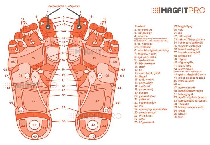 Végre Magyarországon is kapható! A MagfitPRO az akupresszúra és a mágnesterápia erejével segít Önnek túlsúlyát és izületi fájdalmait leküzdeni! Próbálja ki kockázat nélkül, hiszen a MagfitPRO Superme csomagjához 100% Pénzvisszafizetési Garancia jár!