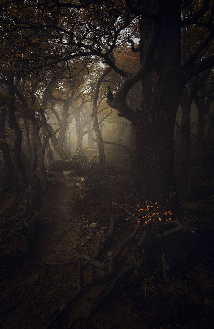 "Enter | Forest Of Souls - by Alexandre Deschaumes (""Wandering into the misty - twisted forests of Patagonia"")"