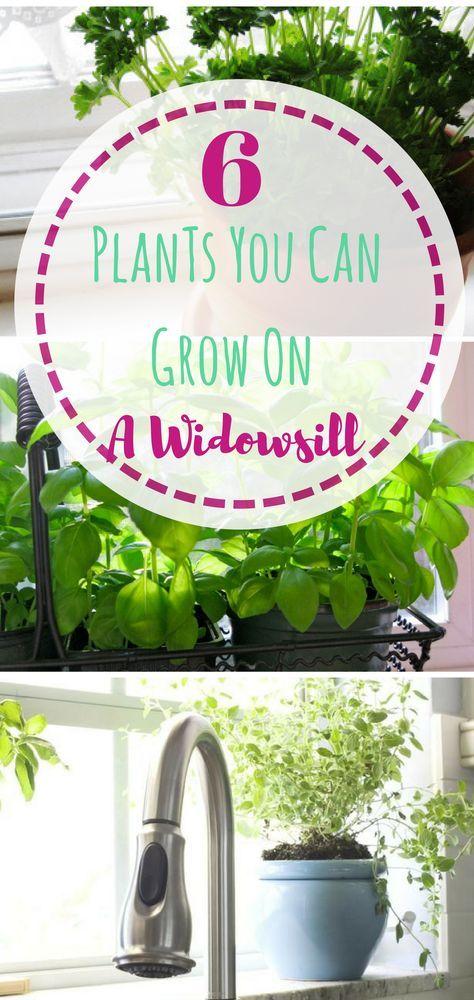 Gardening, Easy Gardening, Indoor Gardening, Indoor Gardening Tips, Gardening Tips and Tricks, Indoor Gardening Hacks, Home, Home Decor, DIY Home