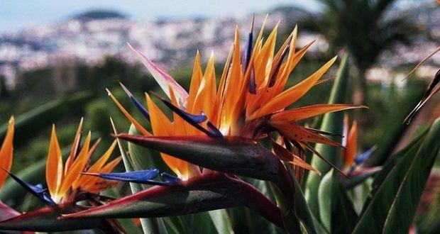 """Einige Streiks könnten den Flugreisenden die Feiertage vermiesen. Besonders schlimm dürfte das Chaos auf dem Flughafen der Atlantikinsel Madeira werden. Eines der beliebtesten Orte der Welt, um Silvester zu feiern. Doch das Bodenpersonal der """"Groundforce"""" und der """"Portway"""" erschweren dem Urlauber die Anreise per Flugzeug und auch anderswo wird gestreikt."""
