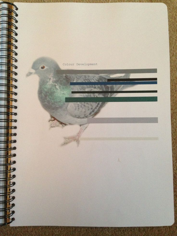 Pigeon Project: Colour development: Jovonnista -- I like this way of showing colour selection.