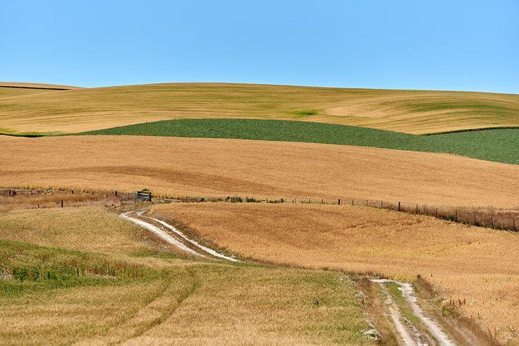 Farm fields near Fairlie, South Island NZ.