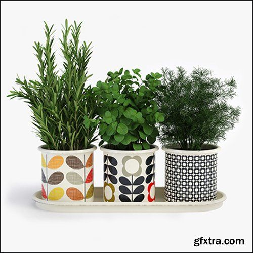 Orla Kiely 3 Herb Pots With Tray