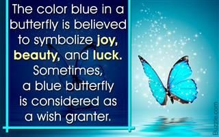 Butterflies represent hope, courtship, wedlock, love and reincarnation as per the many theories known around the world. But there's more to be known about the specific meanings and symbolism associated with yellow butterflies.