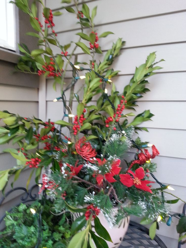 I always love fresh holly on my front porch at Christmas.   www.christinelindsay.org
