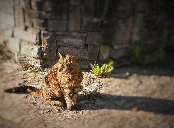 chat tigré devant un muret de pierres grises et près d'une plante esseulée