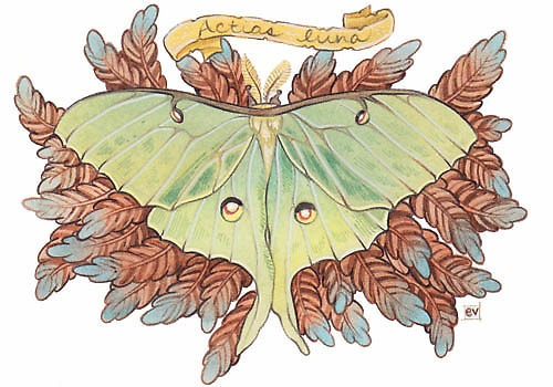 luna moth - LOVE THE STYLE.: Luna Moth, Purple, Moth Tattoo, Dusty Pink, Inked Inspiration, Illustrated Insects2