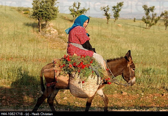 A donkey in Morocco.
