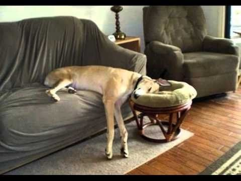 Zabawne Psy Funny Dog Vines 2015 - YouTube