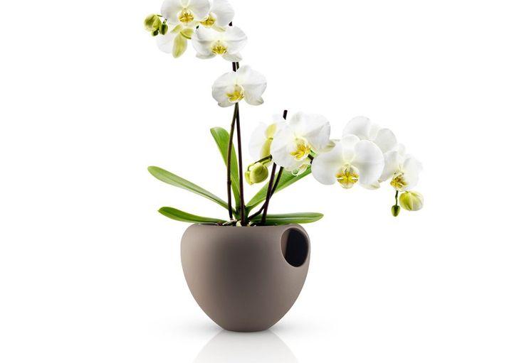 vaso-per-orchidee-con-riser