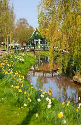 Tuinposter_brug-met-gele-tulpen