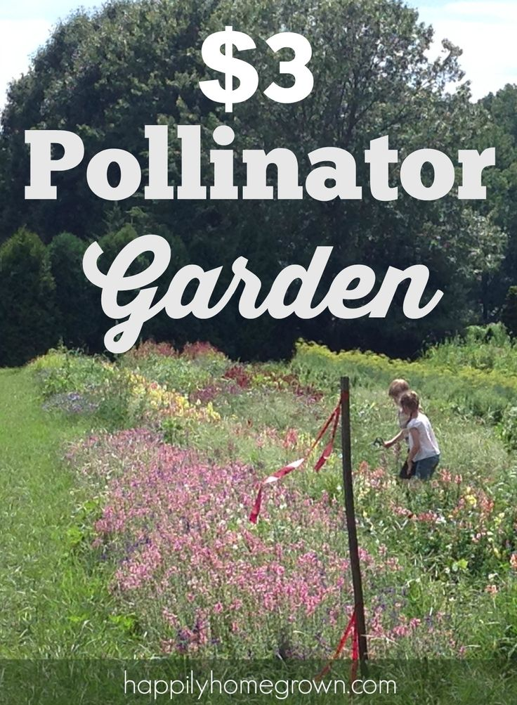Adding a pollinator garden to your yard does not have to be expensive. I am doing it this year, and its only costing me $3 for more than 40 different plant!