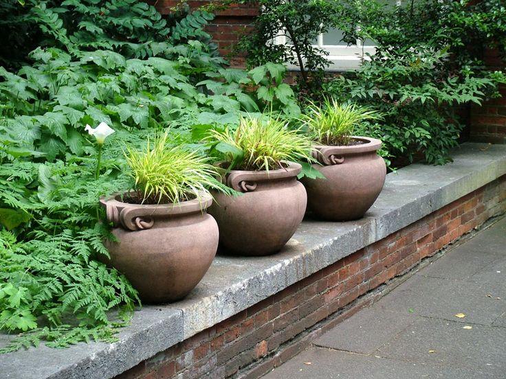 garden plants - Google zoeken