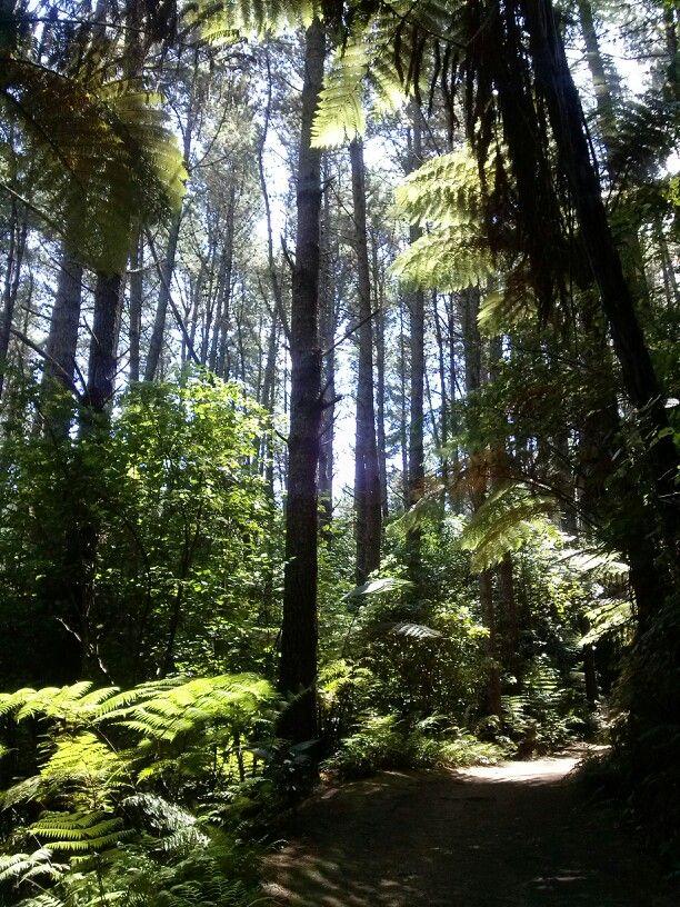 Papamoa Hills, New Zealand