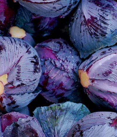 Purple | Porpora | Pourpre | Morado | Lilla | 紫 | Roxo | Colour | Texture | Pattern | Style | Form | Cabbage (purple)