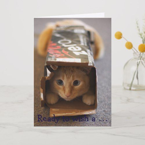 Get Set Go Funny Birthday Card With Cat