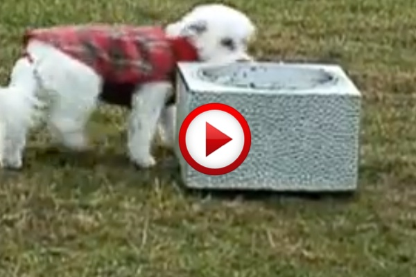 Dogs pranked by their food #dogs, #videos, #videobox, #pinsland, #funny