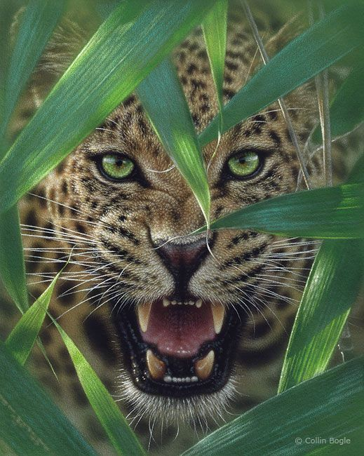 .......ambush by colin bogle