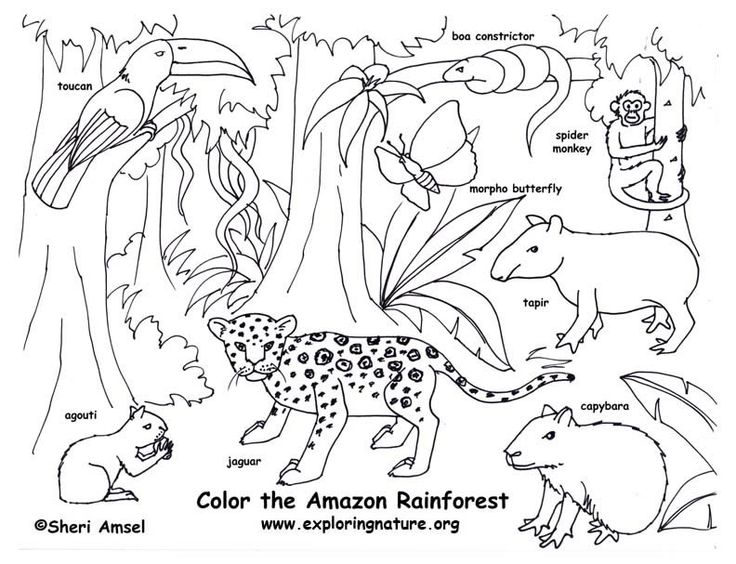 rainforest color pictures rainforest amazon coloring. Black Bedroom Furniture Sets. Home Design Ideas