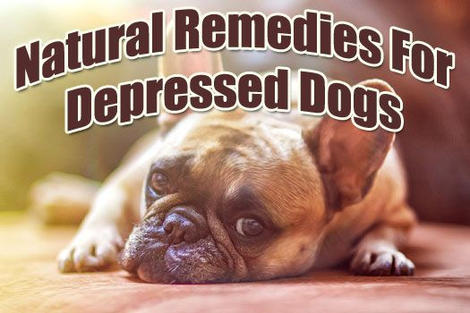Natural Treatment For Distemper In Dogs