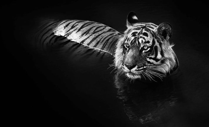 12 Breathtaking Wildlife Photos from David Yarrow's New