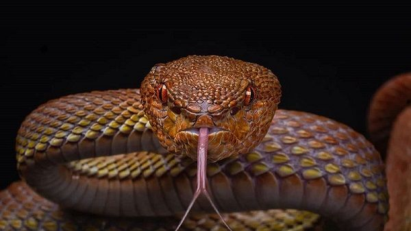 تفسير رؤيا الثعبان في الحلم Snake Venom Snake Animals
