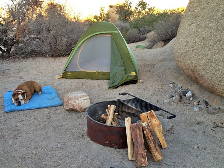 Go camping at Joshua Tree...WITH MY BULLDOG! [definitely check out this awesome blog entry, Lauren's pics are incredible]