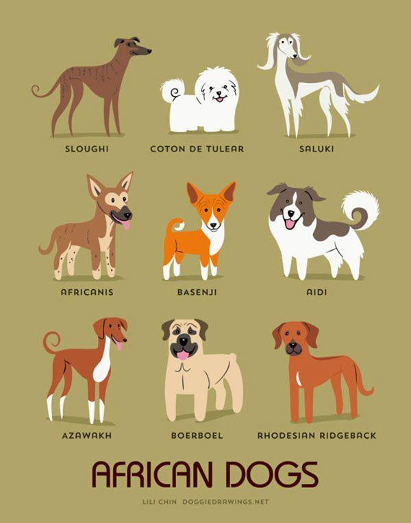 cães africanos