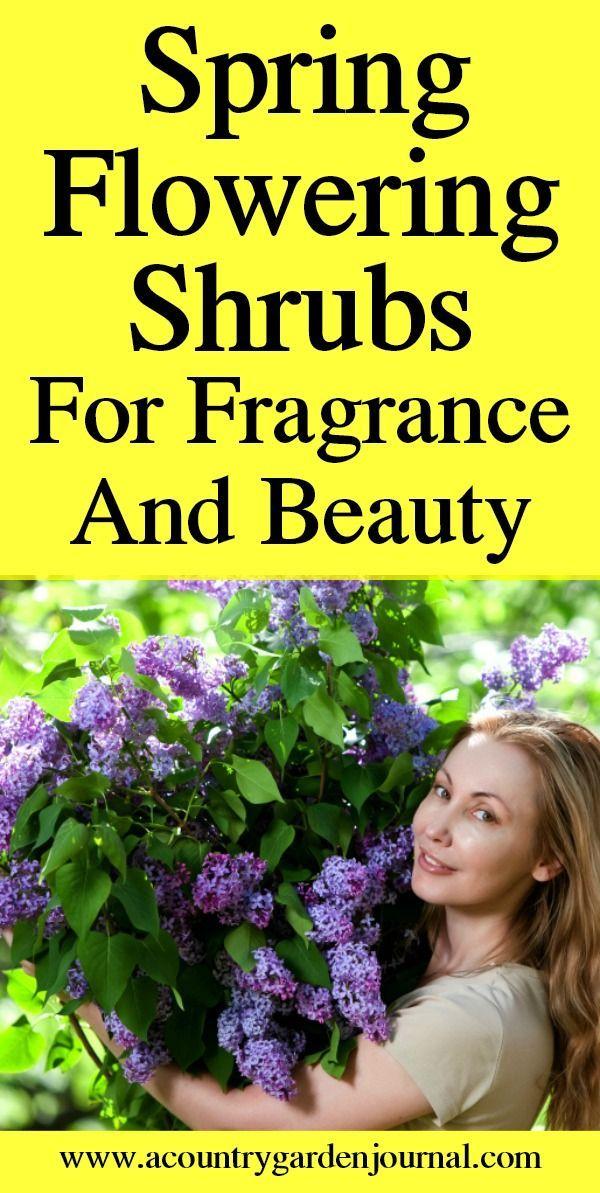 Glorious Spring Flowering Shrubs Flowering Shrubs Shrubs Pruning Shrubs